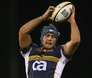 Brumbies lock Adam Wallace-Harrison claims a lineout