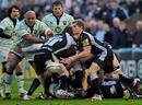 Newcastle's Chris Pilgrim feeds his backline