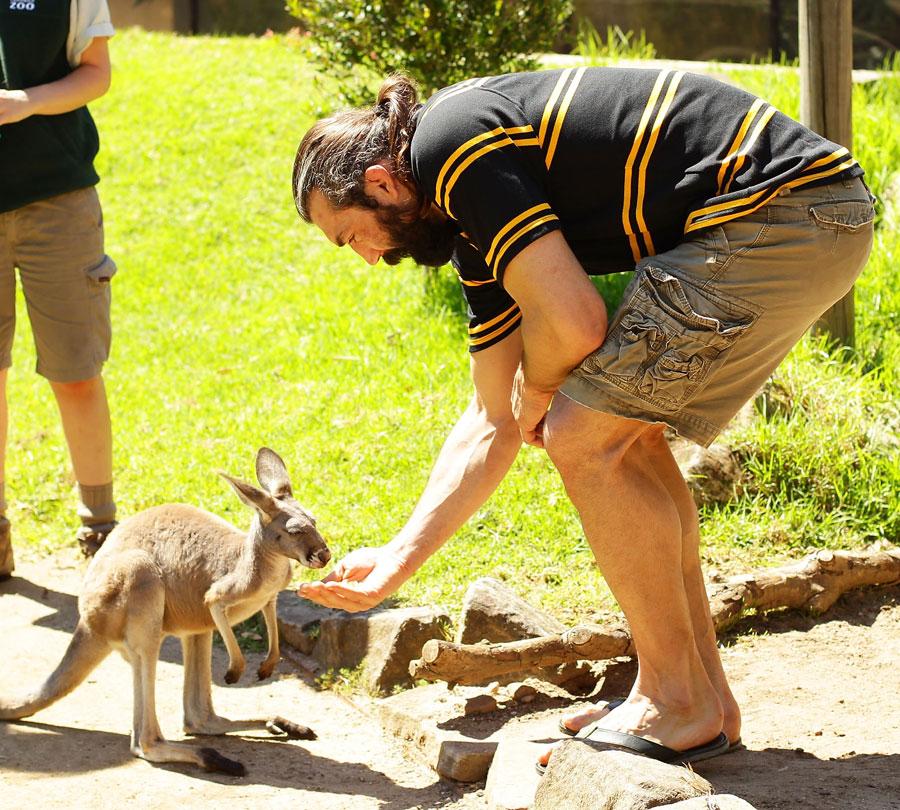 Sebastien Chabal feeds a kangaroo
