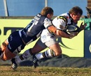 Northampton's Paul Diggin dives in to score a try